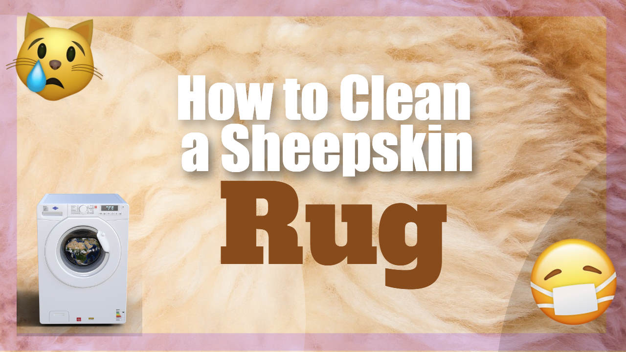 How to Clean a Sheepskin Rug Even When Your Pet Thinks It's A Bed!