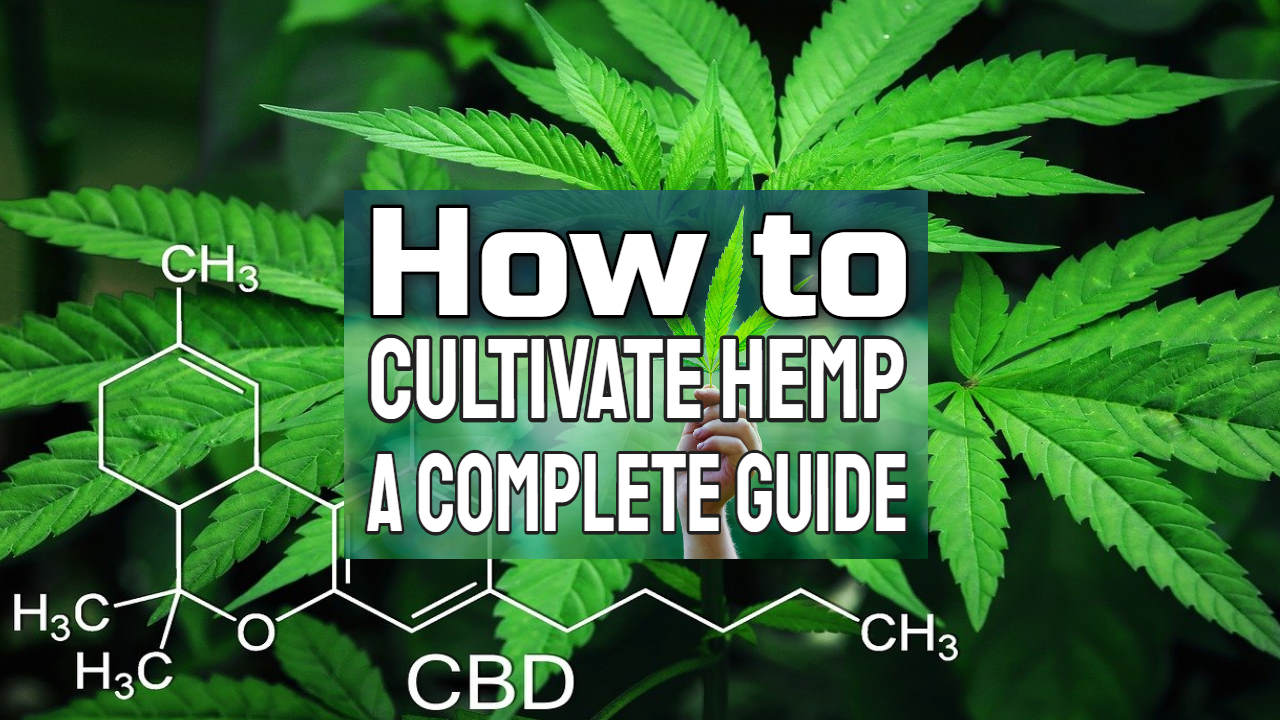 "Image text: ""How to cultivate hemp guide""."