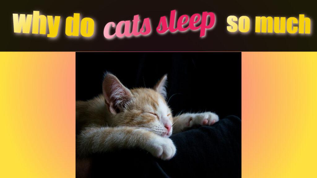 How Long Do Cats Sleep?