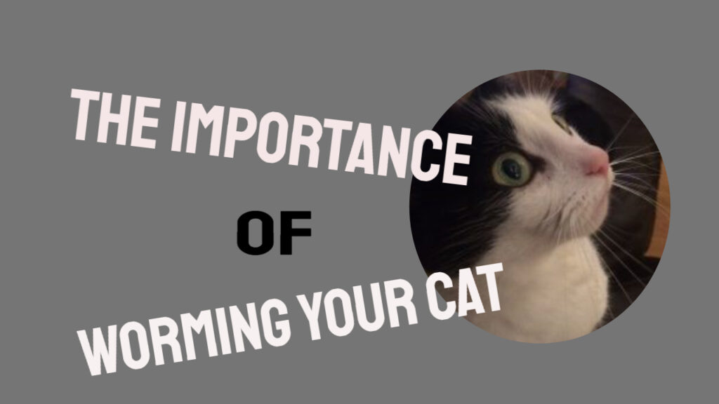 Some Tips On Worming Your Cat