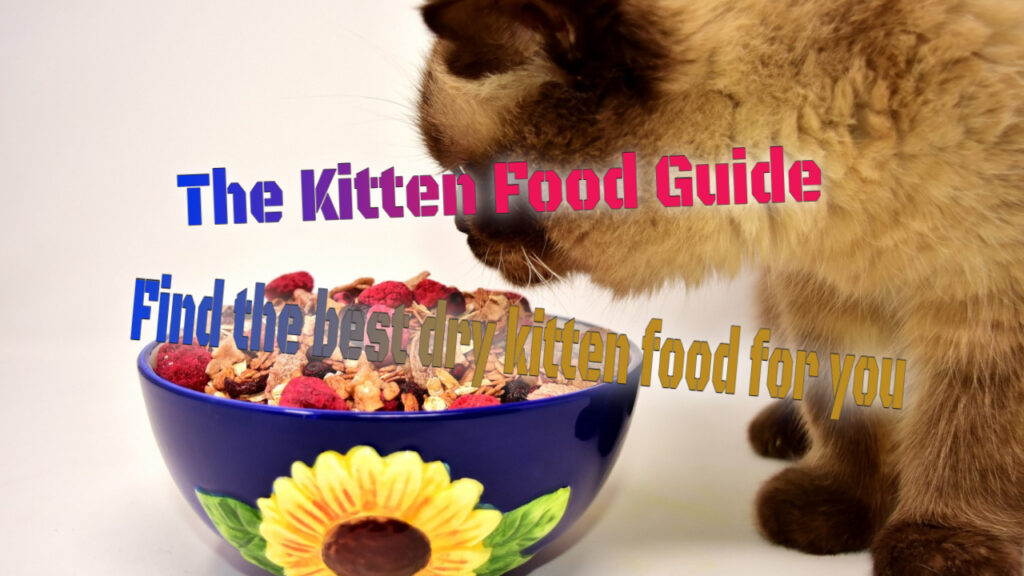The best Dry kitten Food