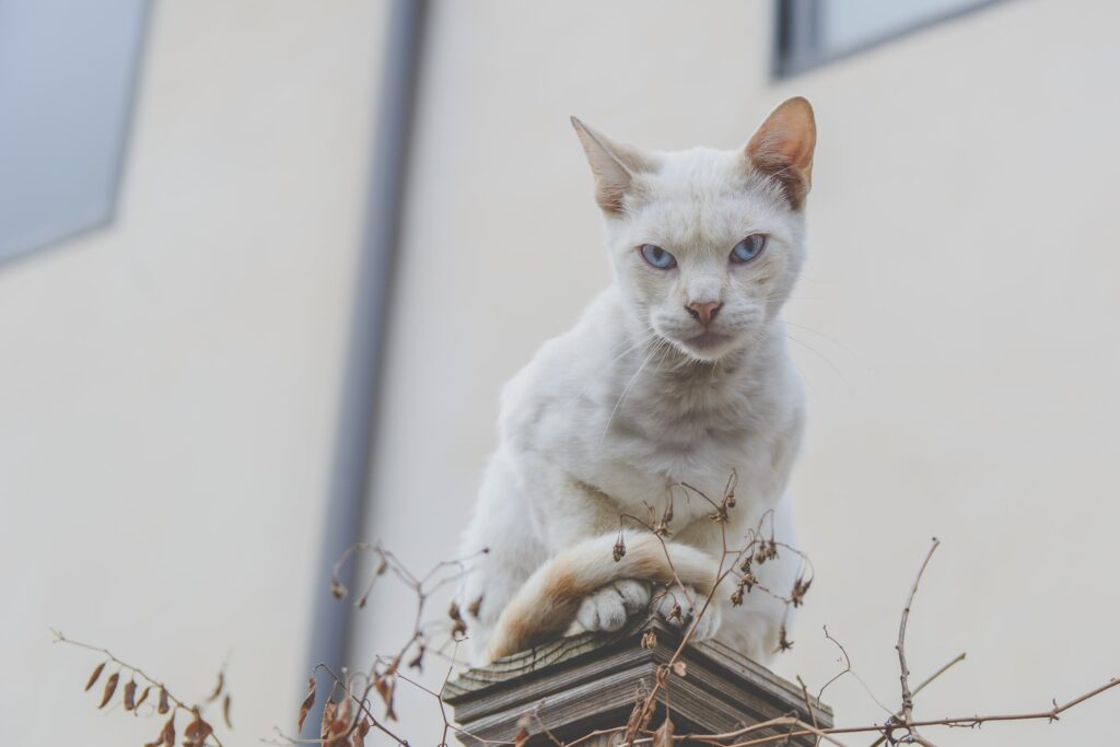 Choosing the Best Food For Egyptian Cat Breeds