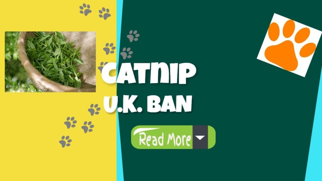 Catnip Ban In The United Kingdom
