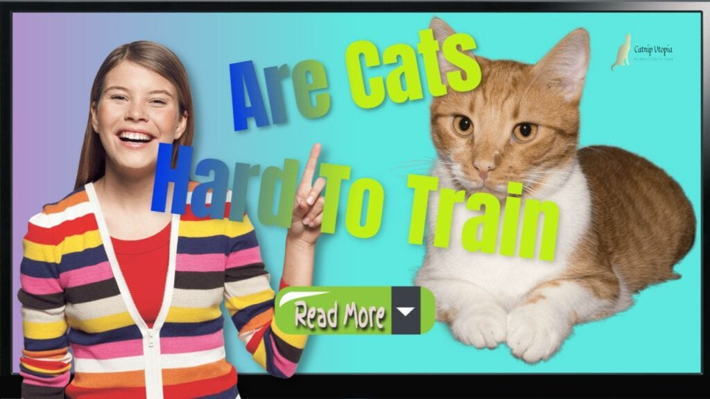 Are Cats Hard To Train In Relation To Dogs