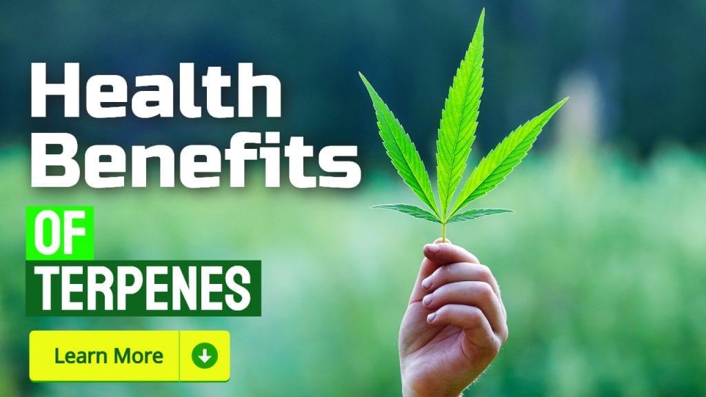 Health Benefits of Terpenes