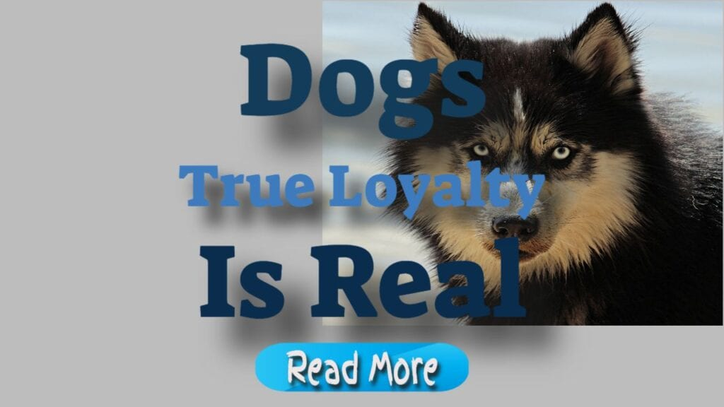 Dogs True Loyalty is Real