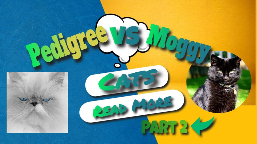 Cat breed Information – Pedigree VS Maggie Part 2