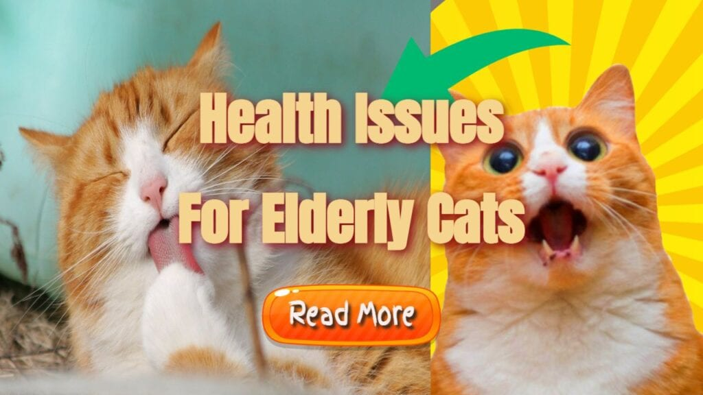 Health Issues For Elderly Cats